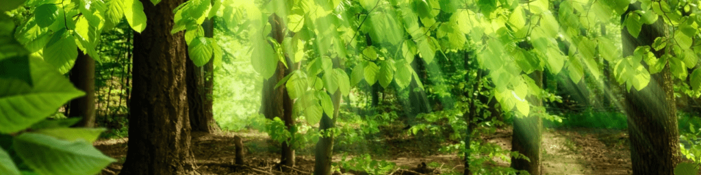 Rebecca Coomes the healthy gut blog Sunlight Dappled Trees Banner Image